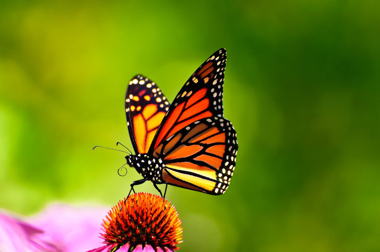 a big butterfly thank you grateful bread bakery u0026 cafe